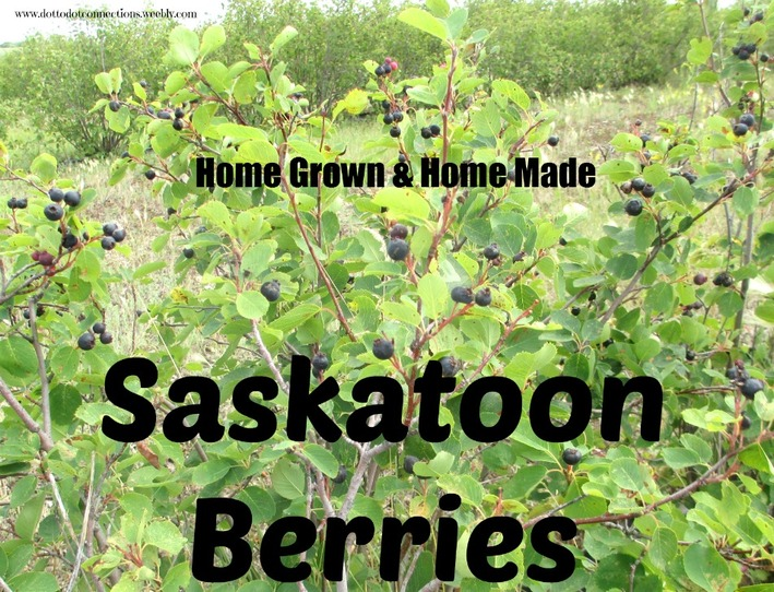 Saskatoons: Home Grown & Home Made series from Dot-to-Dot Connections