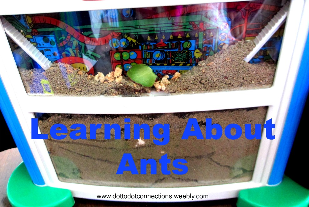 Learning About Ants from Dot-to-Dot Connections
