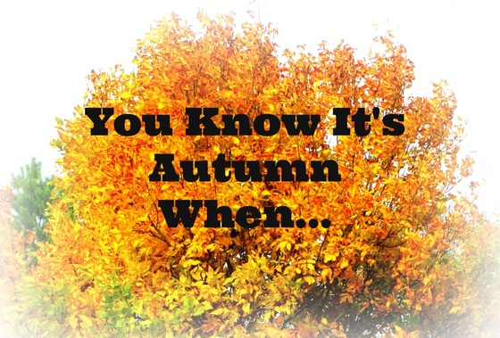 Image result for its autumn
