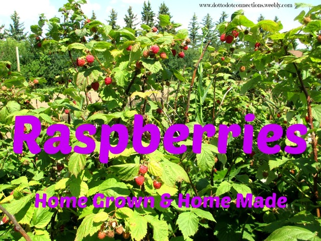Raspberries: Home Grown & Home Made from Dot-to-Dot Connections